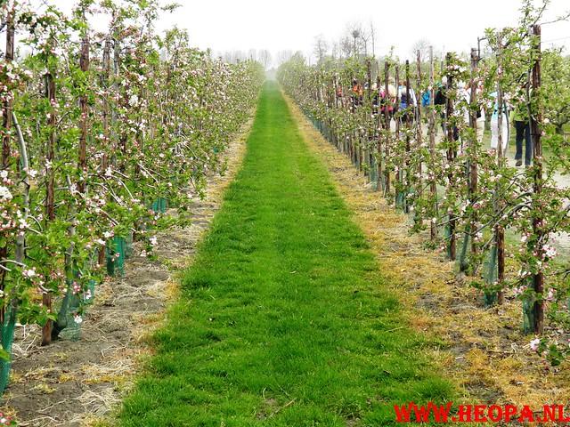 16-04-2011     Rode-Kruis   Bloesem   wandeltocht 26 Km (20)