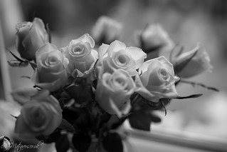 Black and White Roses | by Alex Matravers