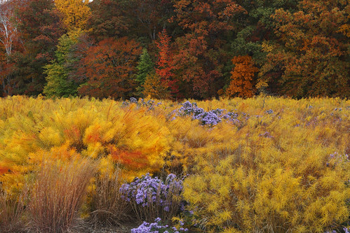 National Arboretum in November | by dc_gardens