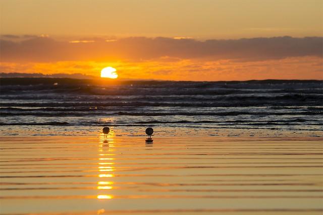 Il y a le ciel, le soleil et deux bécasseaux Sanderling fouissant le sable à marée montante
