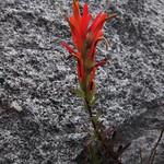 """Mo, 02.03.15 - 14:07 - Parque Nacional Natural """"El Cocuy"""""""