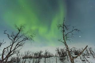 Auroras Boreales en Noruega-63 | by luisete