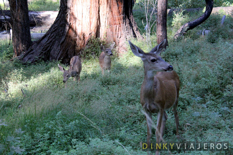 Yosemite-National-Park-041