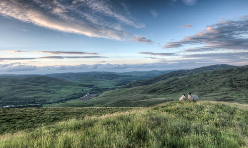 sunset landscape scotland sheep yarrow miscellaneous borders scottishborders