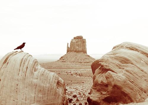 americansouthwest view boulder crow nikond810 monumentvalley westmittenbutte