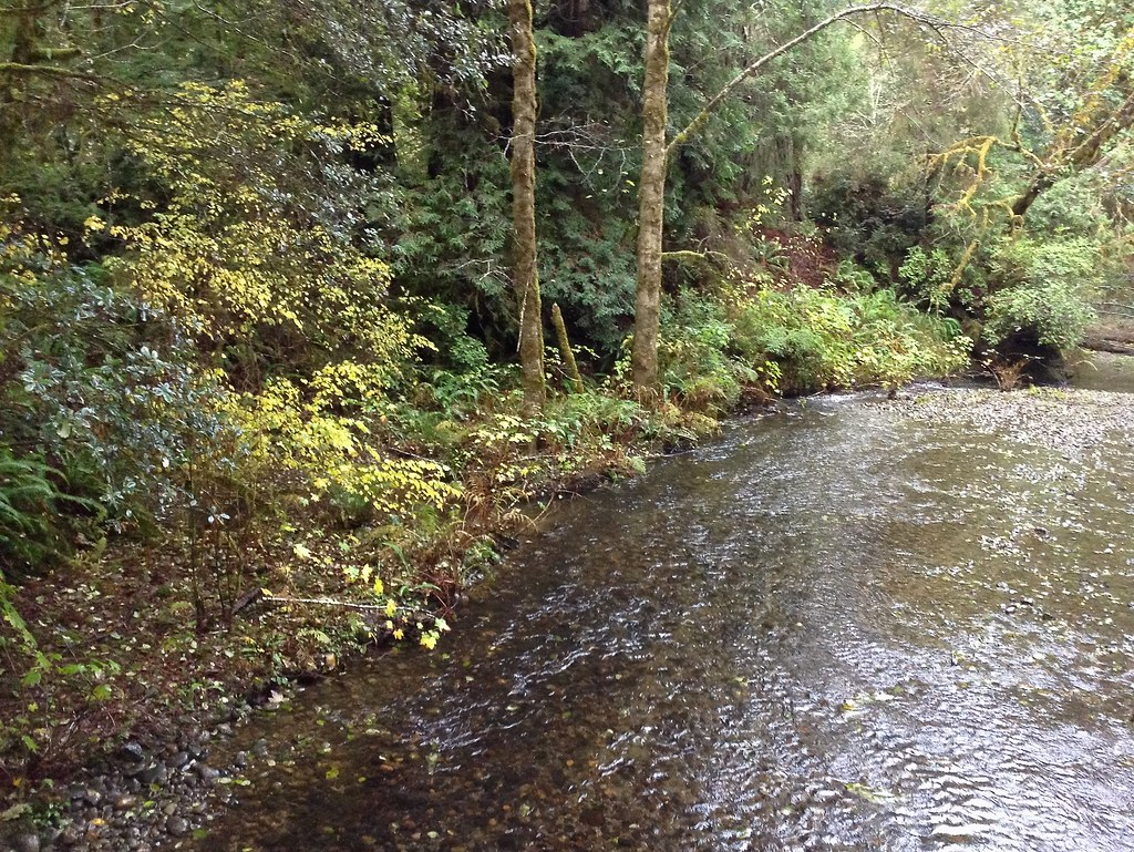 Prairie Creek Redwoods State Park Creek
