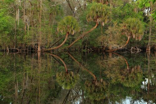 hillsboroughriver troutcreekpark