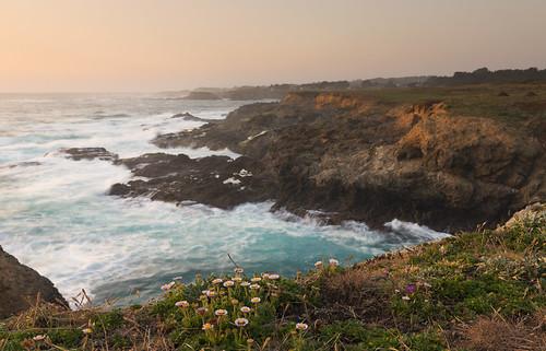ocean flowers northerncalifornia pacificocean fortbragg californiacoast marinelayer mendocinocoast summerflowers pointcabrillo