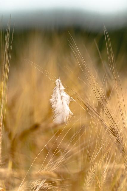 Feather & Barley