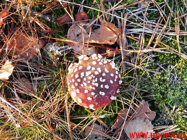 22-10-2011             Driebergen         26 km (25)