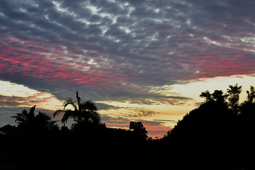 nikon d7200 dusk trees twilight tamron sunset red redsunset palmtrees clouds tamronsp2470mmf28divcusd storm sky bluesky topf25 500v20f