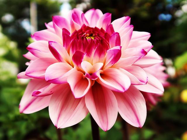 1 in Full Bloom Almost