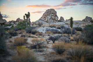 Silent Beauty, Joshua Tree National Park | by Christopher.Michel