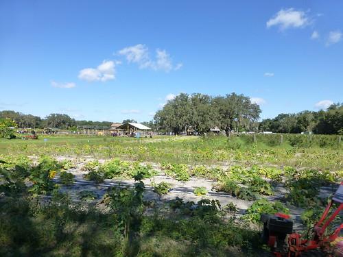 farm sweetfieldsfarm