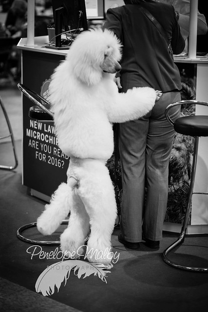 Suspicious activity at Crufts