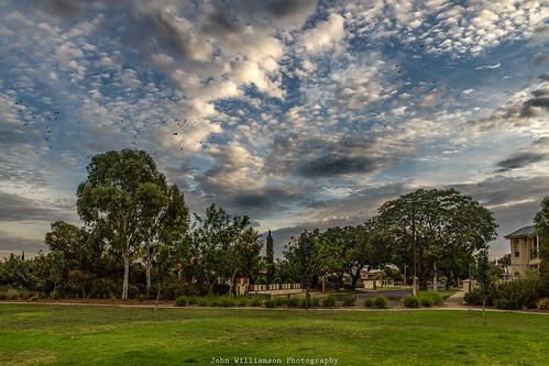 adelaide birds clouds outdoor southaustralia sunrise trees urban westcroydon australia