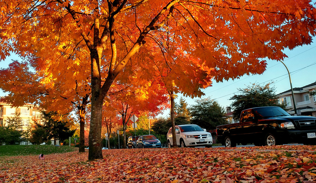 Autumn of Vancouver