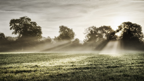 eadesmeadow worcestershirewildlifetrust autumn september mist morning sunrise landscape sony meadow green field sunlight sun trees hedgerow grass