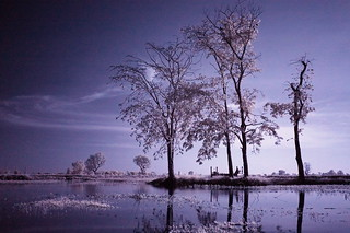 12 Tree lake front processed FUJI | by Matt Jones (Krasang)