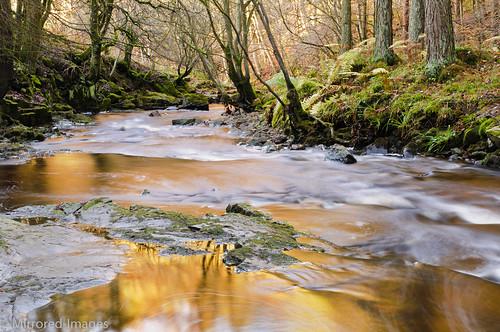 longexposure autumn trees light colour nature woodland reflections countryside stream pennines codurham teesdale northeastengland