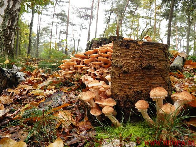 20-10-2012     Wedeblick-   Driebergen        25 Km (77)