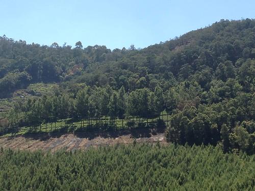 india green forest tn myview nilgiris emmathomas woodsopposite