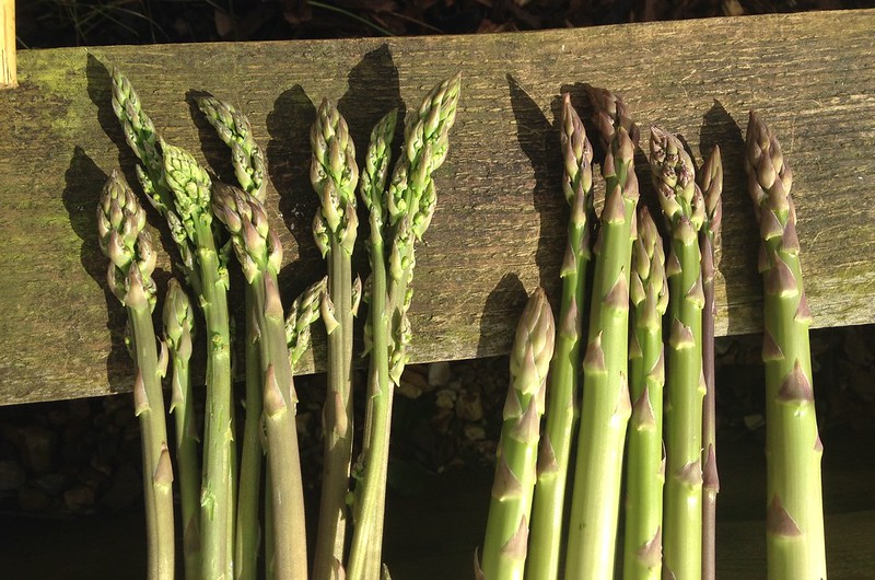 Asparagus (right) and wild asparagus