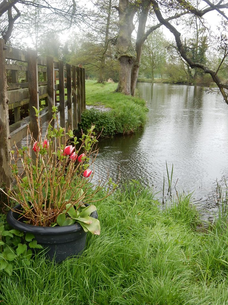 Tulips by the Stour Manningtree Circular