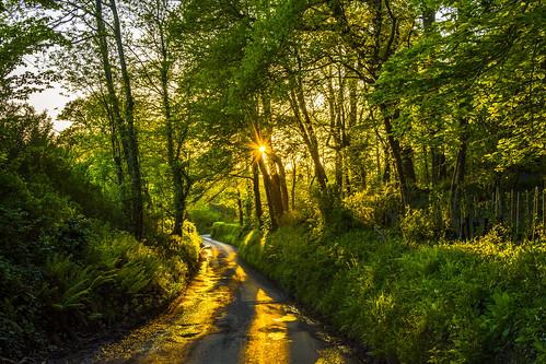 dorset sunset glow pamphill village light trees hedges landscape view nikon d7200