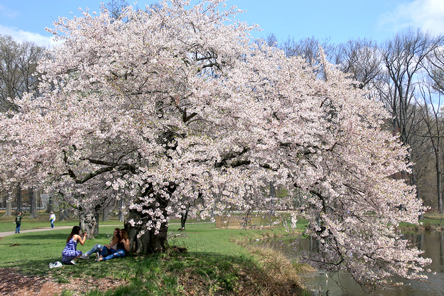 Nomahegan Spring