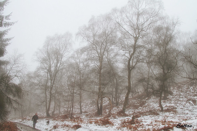 SherBrook Forest - Cannock Chase
