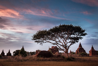 Bagan Tree | by Gzooh