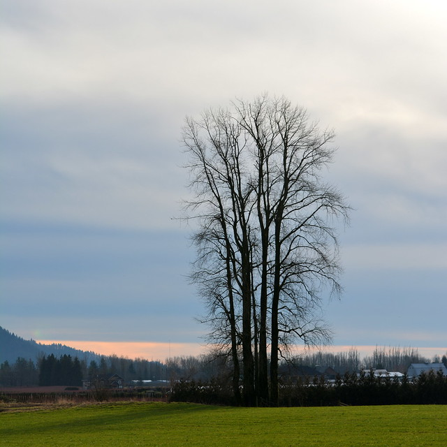 SUNSET IN THE FRASER VALLEY, NEAR ABBOTSFORD,  BC.