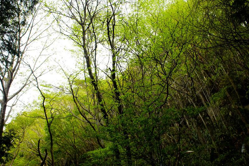 2014-05-06_02127_九州登山旅行.jpg