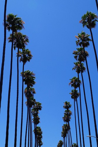 Palm Trees Of Los Angeles | by Joey Z1