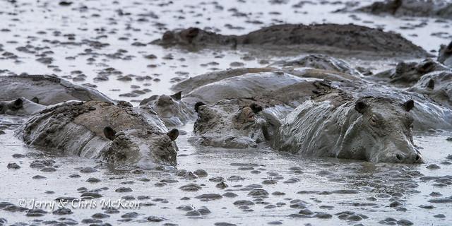 More mud monsters!