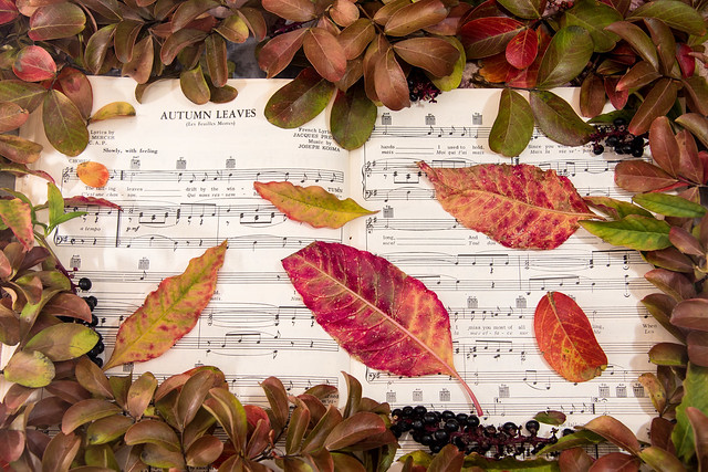 Song of Autumn Leaves