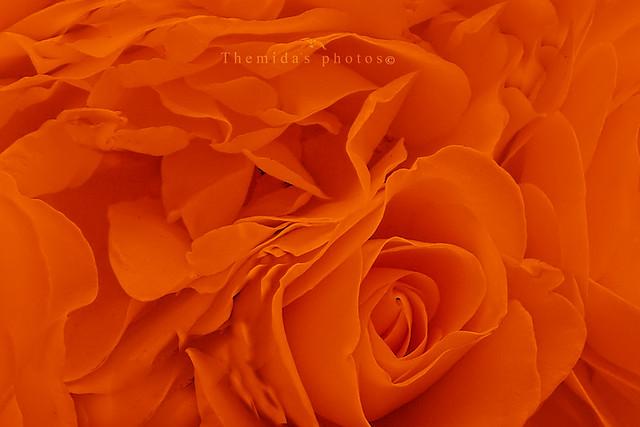 Soft orange filling.