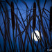 Jeff Regier - Blue Moon - Runner Up - Scenery