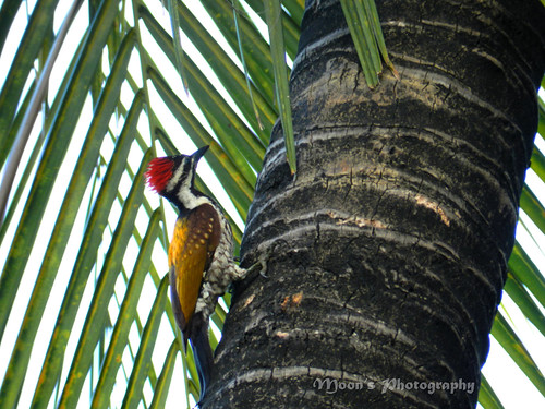 the #woodpecker in my backyard | by moon@footlooseforever.com