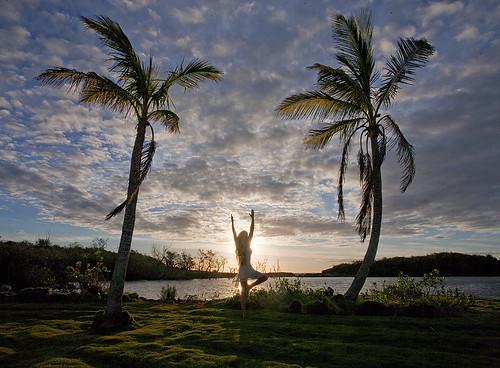 tree art yoga sunrise dawn photo jonathan charles bermuda topf100 hungrybay