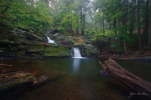 trees summer green creek waterfall pennsylvania poconos pikecounty waterscape waterreflections childspark