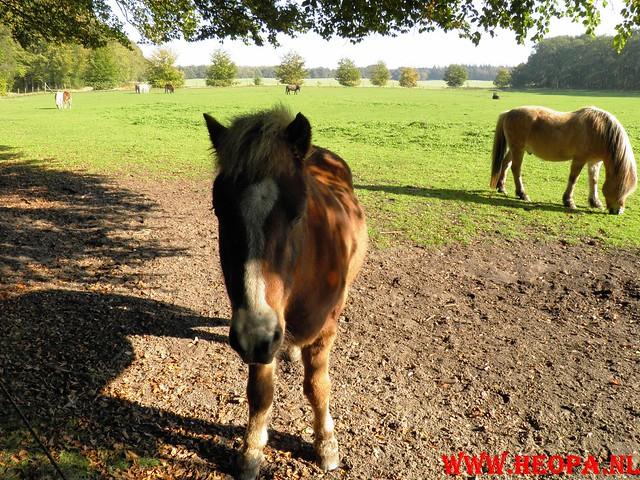 22-10-2011             Driebergen         26 km (130)