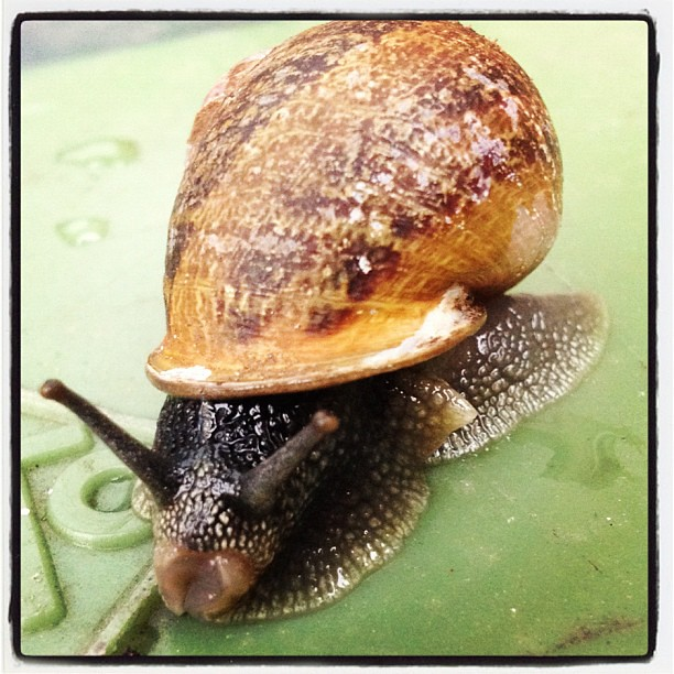 Slakje #snail