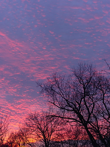 pink blue trees winter sunset sky yellow clouds wow branches chiaroscuro crepuscule 07621