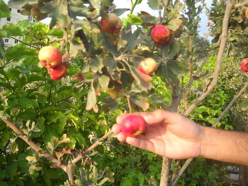 Zaarour Mayhow Berry Fruits Aug 7, 2016 (10) | by toutberryfarms