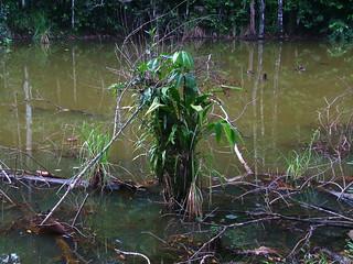 Costa Rica 2006 - 380