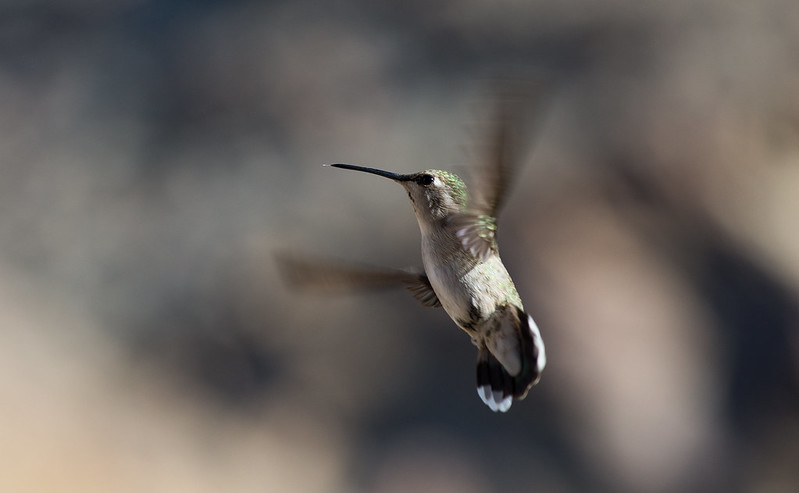 Hummer changing direction