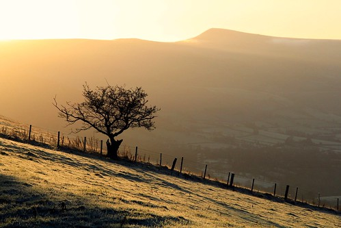 morning light tree sunshine silhouette wales sunrise fence landscape golden nationalpark f14 earlymorning breconbeacons 1500 blackmountains penalltmawr castelldinas ymynyddoeddduon