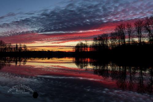 sunset colour reflection tree water silhouette woodland washington unitedstates sundown horseshoelake raja